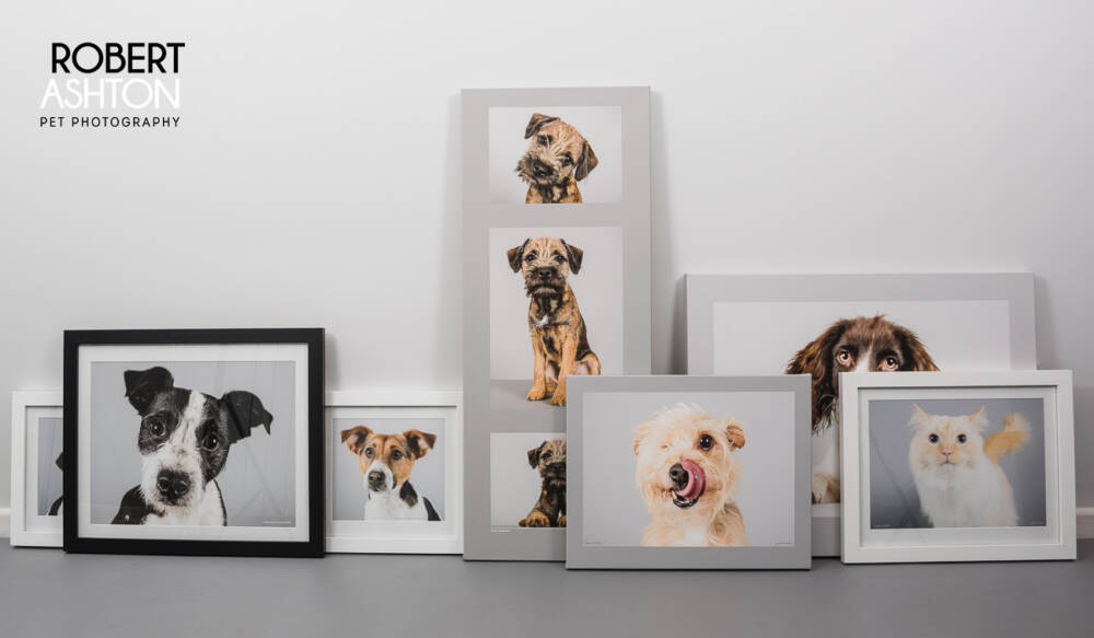 Pet photography session at Companion Vets