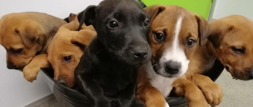 Puppy Classes at Companion Vets
