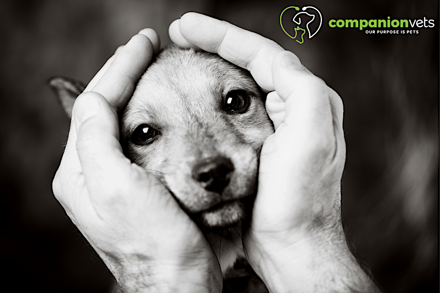 Puppy Socialisation- current recommendations from a Veterinary behaviourist